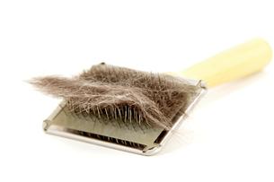 cat hairの写真素材 [FYI00842289]