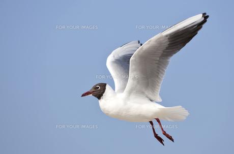 birdの写真素材 [FYI00842327]