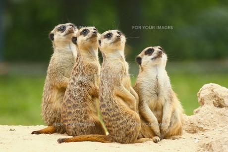 mammalsの写真素材 [FYI00842336]
