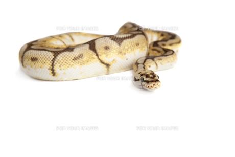 reptiles_amphibiansの写真素材 [FYI00842489]