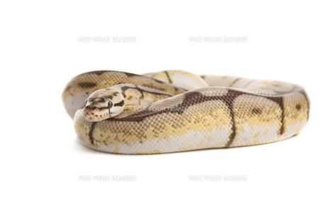 reptiles_amphibiansの写真素材 [FYI00842531]