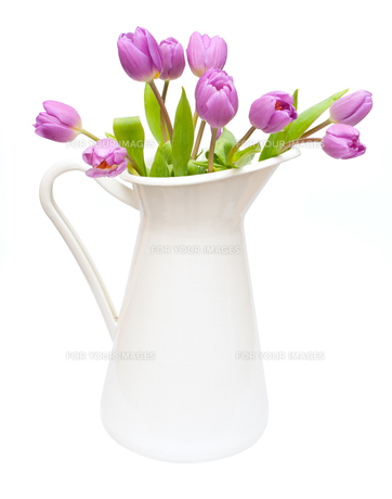 plants_flowersの写真素材 [FYI00842743]