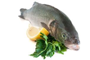 fishes_crustaceansの写真素材 [FYI00842780]