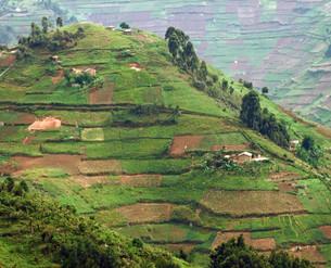virunga mountains in africaの写真素材 [FYI00842838]