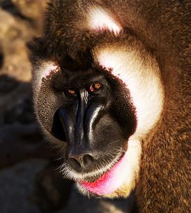 mammalsの写真素材 [FYI00842978]