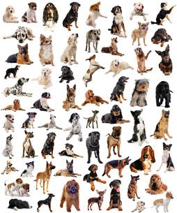 dogの素材 [FYI00842989]