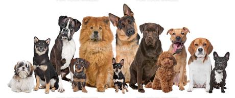 home_animalsの写真素材 [FYI00843223]