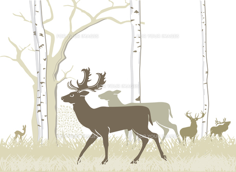 fallow deer and red deerの写真素材 [FYI00843771]