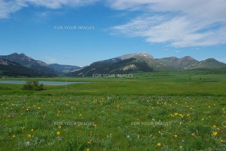 flowers,meadows,lake and rockies,montanaの写真素材 [FYI00843827]