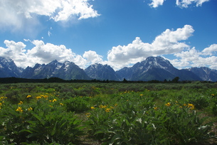 flowers,meadows and grand tetons,wyomingの写真素材 [FYI00843830]