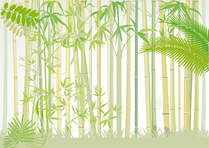 bamboo forestの素材 [FYI00844295]