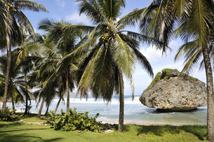 caribbean,barbados,east coastの写真素材 [FYI00844312]