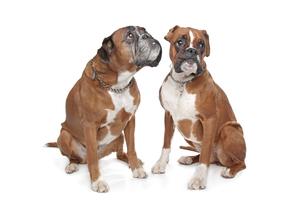 home_animalsの写真素材 [FYI00844721]
