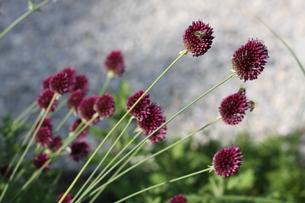 plants_flowersの素材 [FYI00844894]
