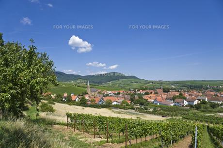 location shot,birkweilerの写真素材 [FYI00845005]
