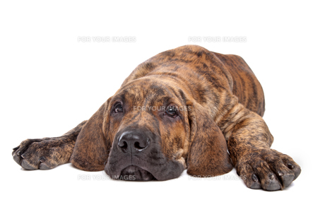 home_animalsの写真素材 [FYI00845355]
