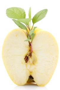 fruits_vegetablesの写真素材 [FYI00845364]