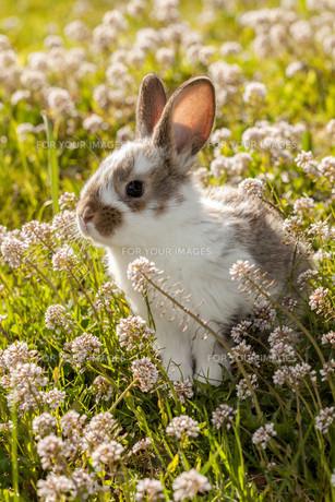 small rabbitの写真素材 [FYI00845403]