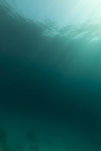 fishes_crustaceansの写真素材 [FYI00845502]