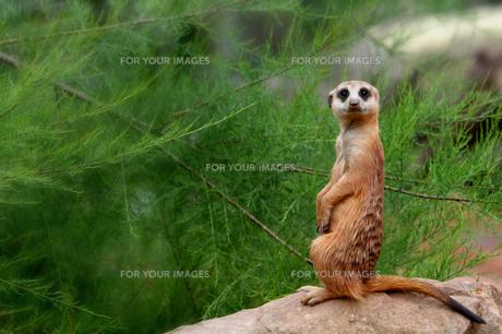 mammalsの写真素材 [FYI00845581]