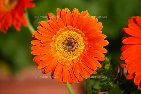plants_flowersの写真素材 [FYI00845906]