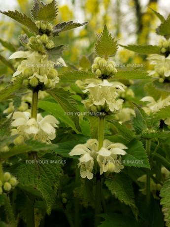 plants_flowersの素材 [FYI00845937]