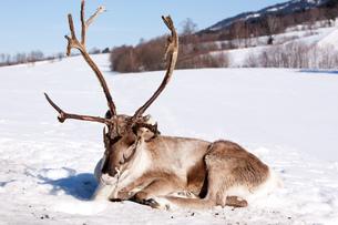 winterの写真素材 [FYI00846094]