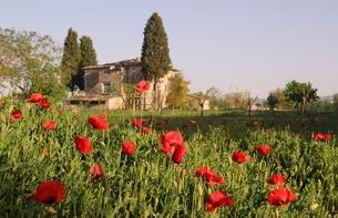 poppies in tuscanyの素材 [FYI00846267]