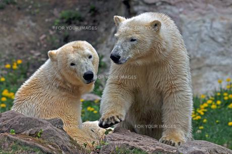 mammalsの素材 [FYI00846436]