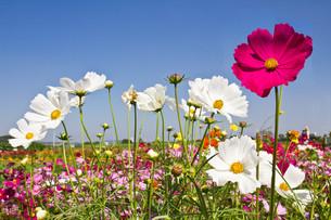 plants_flowersの写真素材 [FYI00846494]