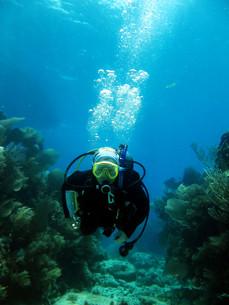 underwater_worldの写真素材 [FYI00846520]