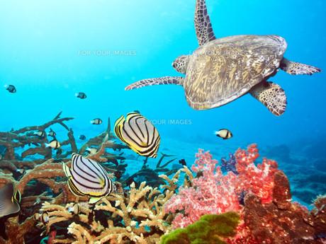 underwater_worldの素材 [FYI00846542]