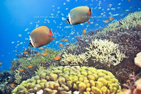 underwater_worldの素材 [FYI00846547]