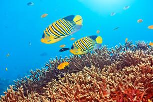 underwater_worldの素材 [FYI00846678]