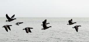 birdsの素材 [FYI00847211]