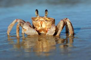 fishes_crustaceansの写真素材 [FYI00847366]
