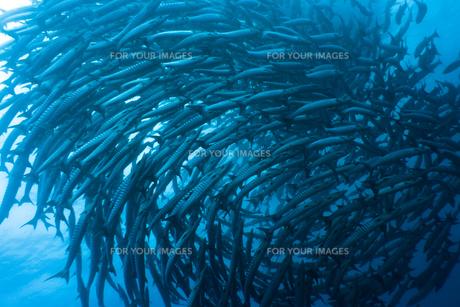 underwater_worldの素材 [FYI00847378]