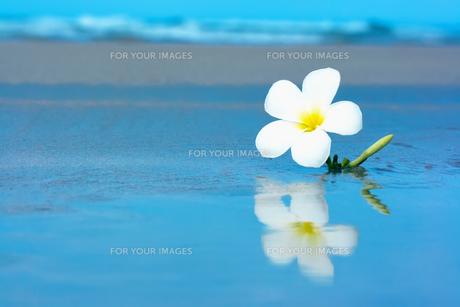 plants_flowersの素材 [FYI00847444]