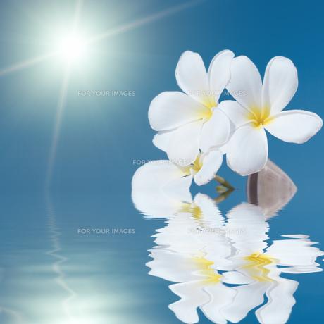 plants_flowersの素材 [FYI00847506]