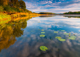 aquatic plants on the danubeの写真素材 [FYI00848437]