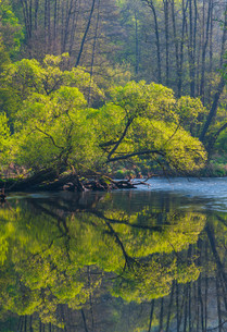 river thaya in austriaの写真素材 [FYI00848450]