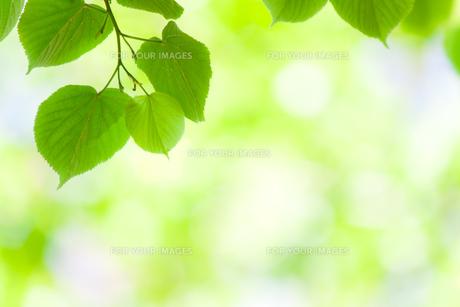 plants_flowersの素材 [FYI00849424]