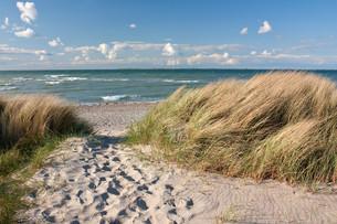 way to the beach by dunes on the baltic sea in heiligenhafenの写真素材 [FYI00851039]