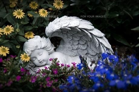 sleeping angelの写真素材 [FYI00851047]