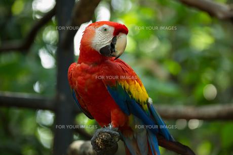 birdsの写真素材 [FYI00851113]
