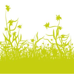 grass meadowの写真素材 [FYI00851117]