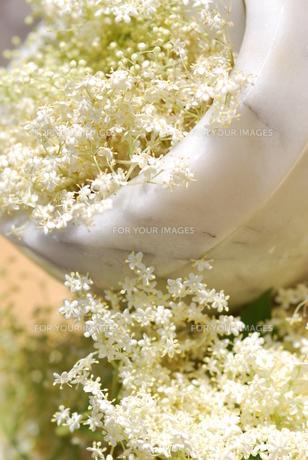 elderflower herb table decorationsの写真素材 [FYI00851209]