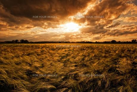 grass_fieldsの素材 [FYI00851394]