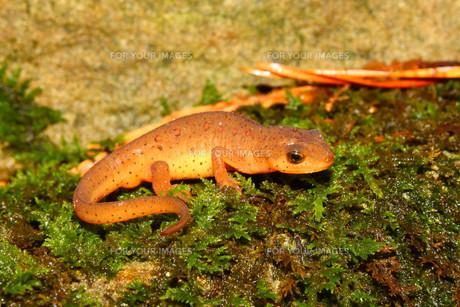 reptiles_amphibiansの写真素材 [FYI00851398]