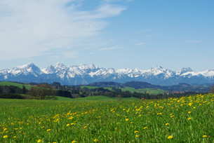 meadows,hills,forests and alps in bavaria,germanyの写真素材 [FYI00851419]